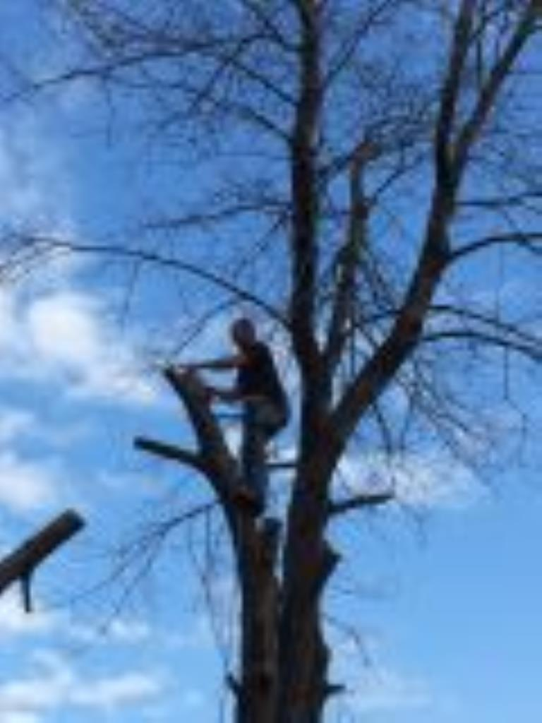 Fraser Tree Care: Hamilton, Stoney Creek, Grimsby, Burlington